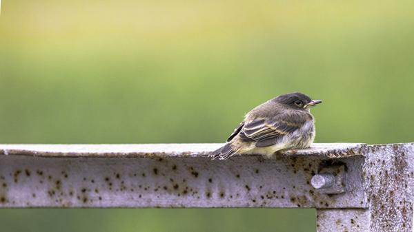 A bird resting