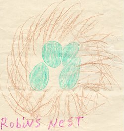 Drawing of robin's nest