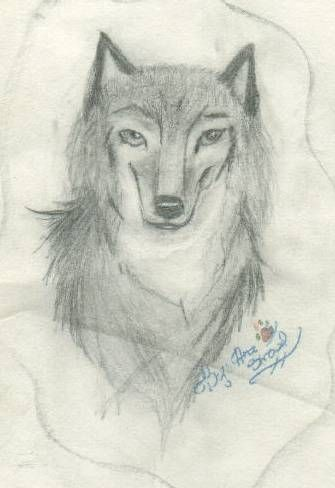Drawing of wolf