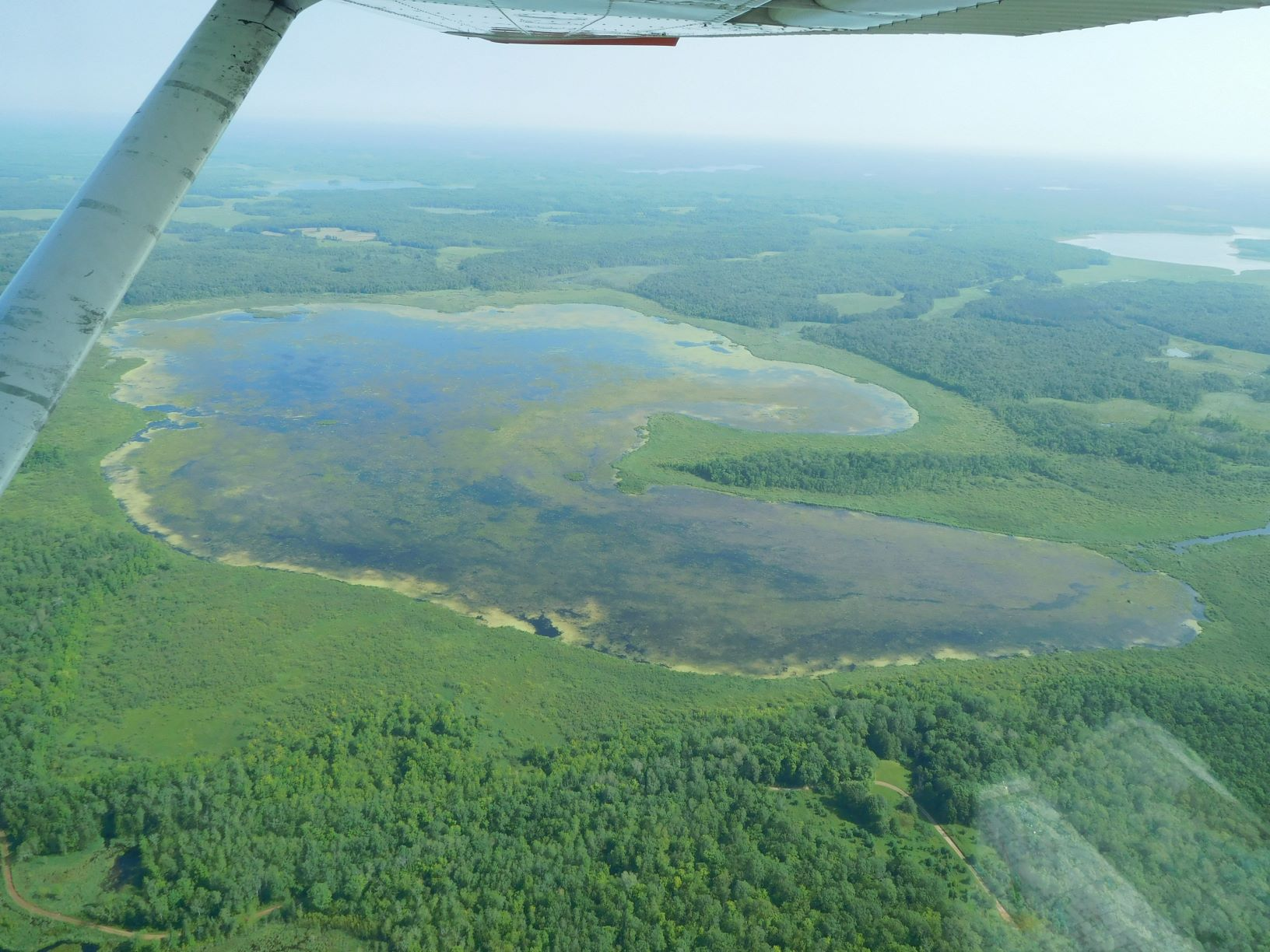 Aerial view of rice waters in northern Minnesota, Great Lakes Indian Fish & Wildlife Commission