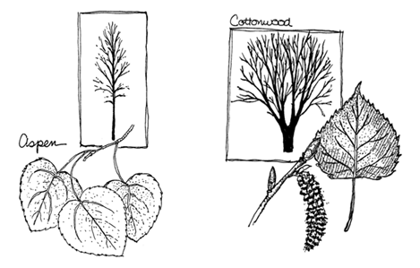 Ilustration of polar trees and leaves